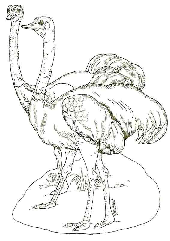 Coin des enfants coloriages faune page 2 - Autruche dessin ...