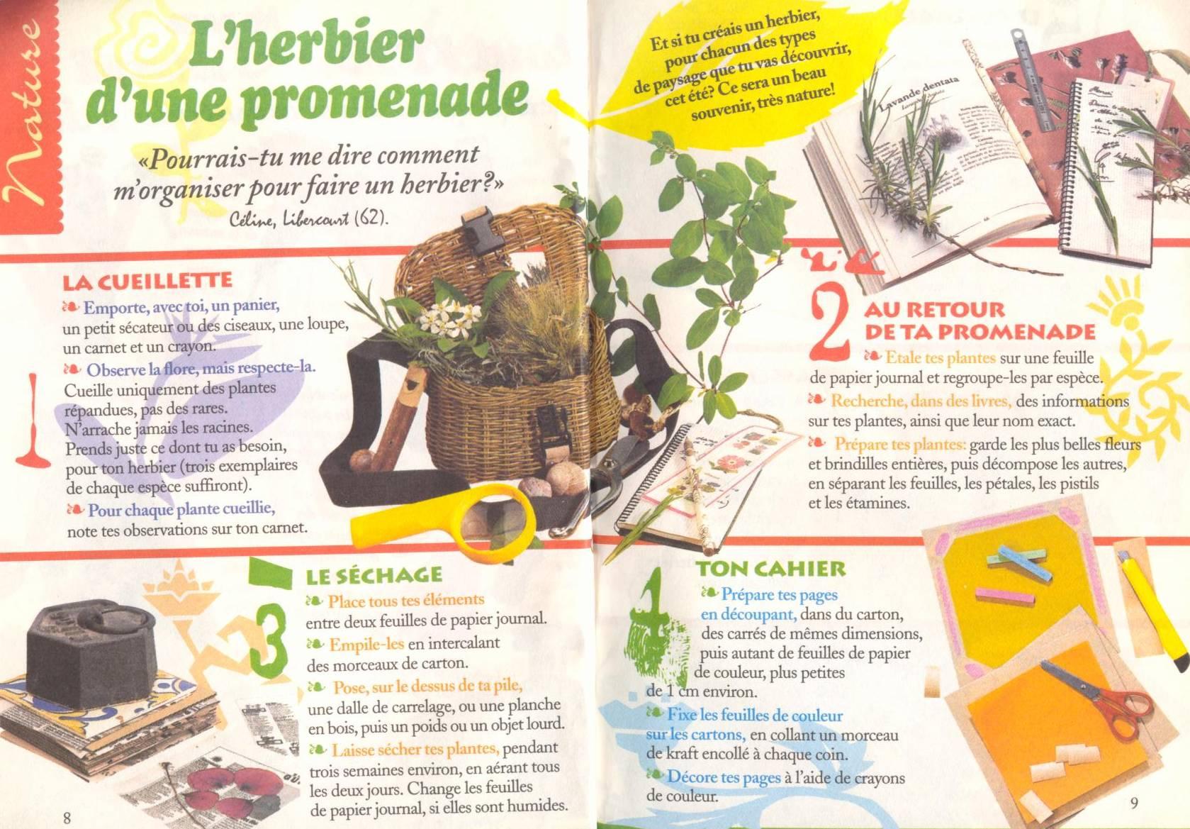 lc * saisons * herbier 1/2