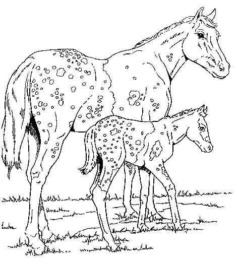 Coloriage cheval - Coloriage poulain ...